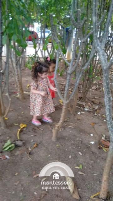 """Descobrindo uma """"floresta"""" na praça"""